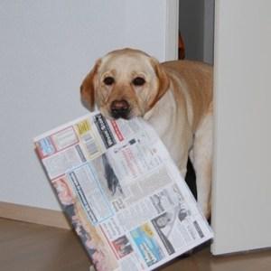 Hond-brengt-krant