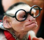 bril - aap