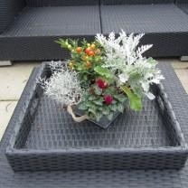 Kleur in de tuin (2)