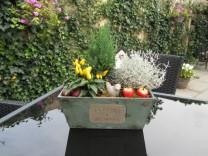 Kleur in de tuin (3)