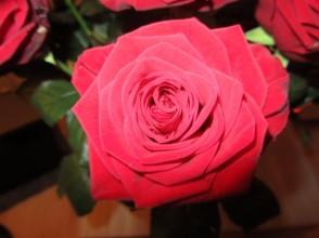 Roos uit boeket van Diana