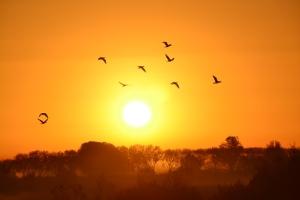 zon, lucht en vogels