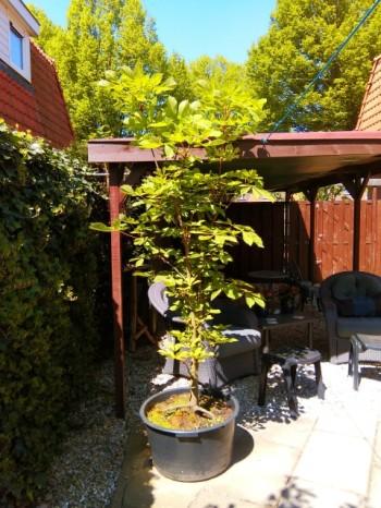 Tuin mei 2016 (4) (Small)